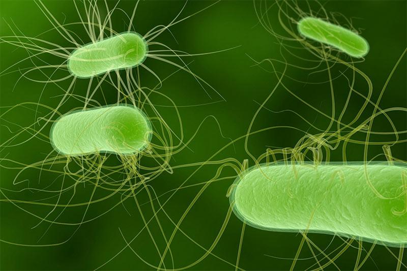 CONGEN Servicelab - Nachweisverfahren für Mikrobiologie
